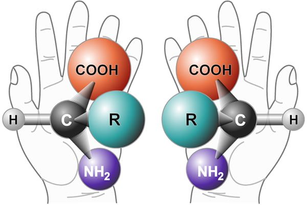 Biological molecules can be right- or left-handed, which affects how they interact with each other and their immediate environment.
